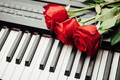 Piano keys and red roses. Closeup view royalty free stock images