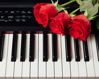 Piano keys and red roses. Closeup view Royalty Free Stock Image