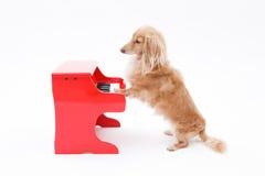 Piano och hund Arkivfoton