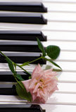 Piano With Rose. Closeup view of a piano with a rose resting on the keys Stock Image
