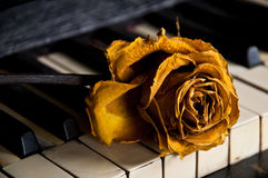 Piano with rose on the keys Royalty Free Stock Image