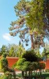 Piano tree Royalty Free Stock Photos