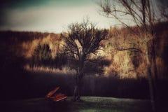 Piano under trädet Arkivfoto