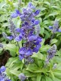 Piano verde della natura del fiore Immagine Stock