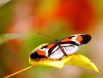 Piano zeer belangrijke vlinder op geel blad Royalty-vrije Stock Fotografie