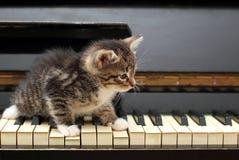 Pianokatt Musiker musik Arkivfoto