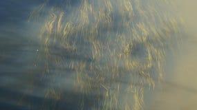 Pianta acquatica Fotografia Stock