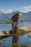 Pianta acquatica del raccolto birmano della donna nel lago Inle Fotografie Stock Libere da Diritti