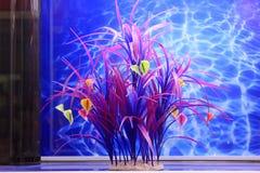 Pianta acquatica fresca in un acquario Immagini Stock Libere da Diritti