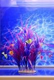 Pianta acquatica fresca in un acquario Fotografia Stock Libera da Diritti