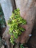 Pianta in albero fotografia stock