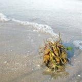 Pianta alla spiaggia Fotografia Stock Libera da Diritti