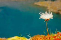 Pianta alpina Fotografie Stock Libere da Diritti