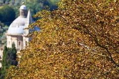 Pianta in autunno. Fotografie Stock Libere da Diritti
