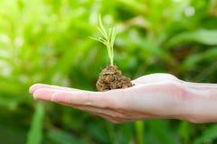 Pianta che coltiva a disposizione suolo a disposizione con agricoltura crescente della plantula verde e che semina la natura di v fotografia stock
