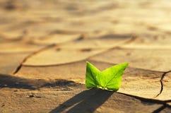 Pianta che cresce attraverso il suolo incrinato asciutto Fotografie Stock