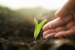 pianta che cresce con la mano e l'icona minerale digitale Comcept di agricoltura fotografia stock