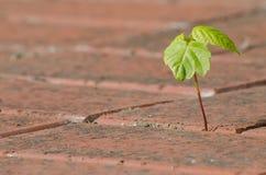 Pianta che cresce dal calcestruzzo Fotografia Stock Libera da Diritti