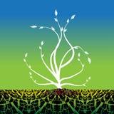 Pianta che cresce dal terreno asciutto Fotografia Stock Libera da Diritti