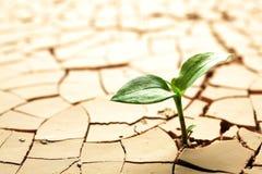 Pianta che cresce nel fango Fotografia Stock