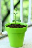 Pianta che cresce nel suolo Fotografia Stock Libera da Diritti