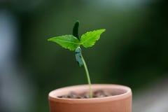 Pianta che cresce nel suolo Immagine Stock Libera da Diritti
