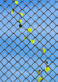 Pianta che cresce sul recinto di chainlink Fotografia Stock Libera da Diritti