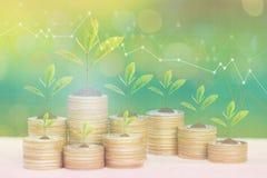Pianta che cresce sulla pila di monete soldi e grafico su fondo, sugli investimenti immobiliari e sul concetto verdi naturali di  fotografia stock
