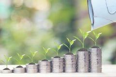 Pianta che cresce sulla pila di soldi delle monete su fondo, sui tassi di interesse e sul concetto verdi naturali di investimento fotografia stock