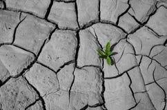 Pianta che cresce in terra incrinata Fotografia Stock Libera da Diritti