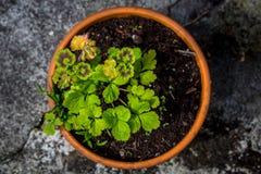 Pianta che cresce in un vaso da fiori circolare Fotografia Stock