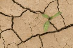 Pianta che cresce in una terra della crepa Fotografia Stock