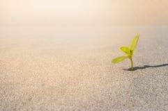 Pianta che germoglia nel deserto Sahara Fondo della sabbia della piantina Un germoglio Fotografia Stock