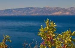 pianta con frutta rossa con il mare ai precedenti fotografia stock libera da diritti