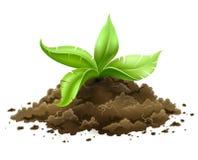 Pianta con le foglie verdi che crescono dalla terra Immagini Stock Libere da Diritti