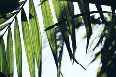 Pianta con le foglie verdi lunghe Fotografie Stock