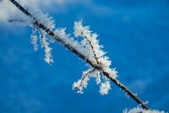 Pianta congelata Fotografie Stock
