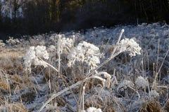 Pianta congelata Fotografia Stock Libera da Diritti