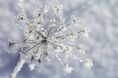 Pianta congelata presto gelida, mattina soleggiata, su un backgroun vago Fotografie Stock