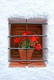 Pianta conservata in vaso rossa sul davanzale della finestra con le barre immagine stock libera da diritti