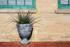 Pianta conservata in vaso in urna Fotografia Stock Libera da Diritti