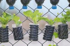 Pianta conservato in vaso in bottiglia di acqua utilizzata Fotografie Stock