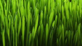 Pianta crescente 4k dell'erba verde stock footage