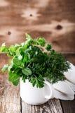 Pianta culinaria ed aromatica fresca delle erbe in tazza rurale fotografie stock