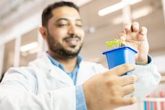 Pianta d'esame del tecnologo del seme immagini stock libere da diritti