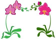 Pianta da appartamento dell'interno arancio porpora del lillà viola di rosa dell'orchidea di phalaenopsis Metta di tre fiori con illustrazione di stock