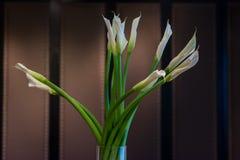 Pianta da appartamento per la decorazione Fotografia Stock Libera da Diritti