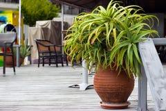 Pianta decorativa di vera dell'aloe in vaso da fiori Fotografia Stock Libera da Diritti