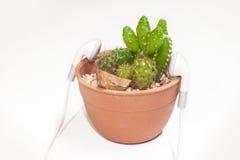 Pianta del cactus fotografie stock