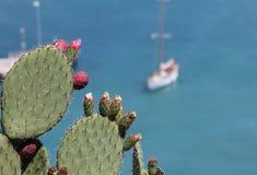 Pianta del cactus al riviera francese Immagini Stock Libere da Diritti